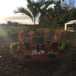THE COLE PRESTON FOUNDATION LAKE WORTH COMMUNITY GARDEN
